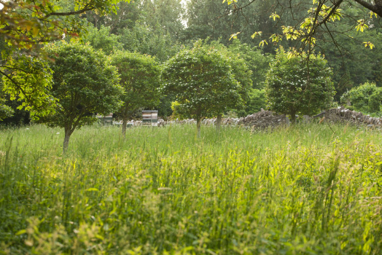 OXLEAZE FARM, OXFORDSHIRE: THE ORCHARD WITH LINE OF CRATAEGUS LAVALLEI TREES. GREEN, FOLIAGE, MEADOW PLANTING, NATURALISTIC, NATURAL, WILDLIFE FRIENDLY, SUMMER.